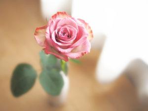 花瓶に生けた一輪のばら