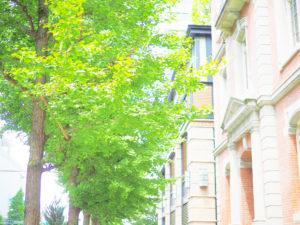 建物と並木