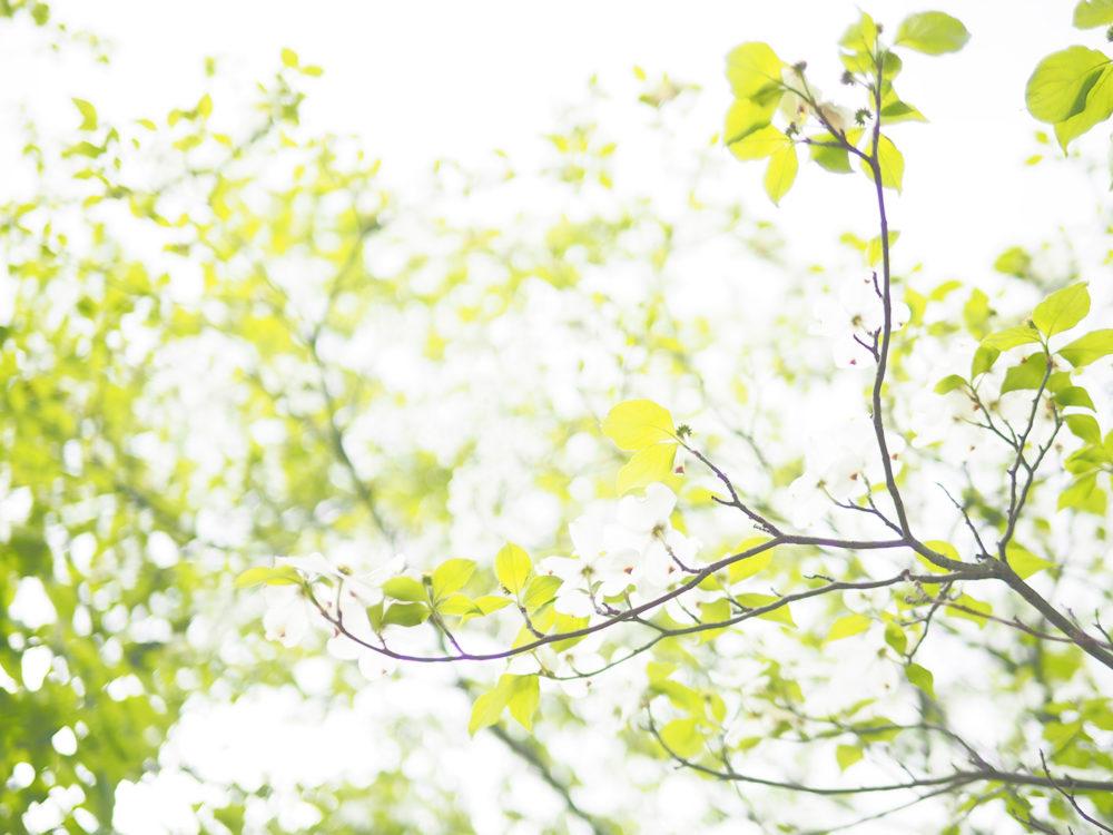 ブランディングの重要性  〜2.22 岡山市障害福祉課セミナーレポ〜