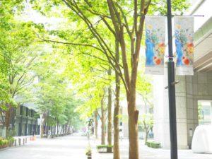 東京・丸の内の街路樹