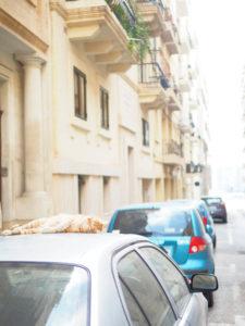 マルタ島の路上の猫