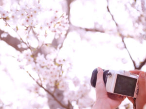 桜の写真をカメラで撮る手元